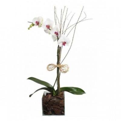 Orquídea Plantada no Vidro Especial