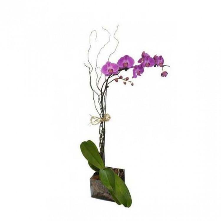 Orquídea Lilás no Vidro