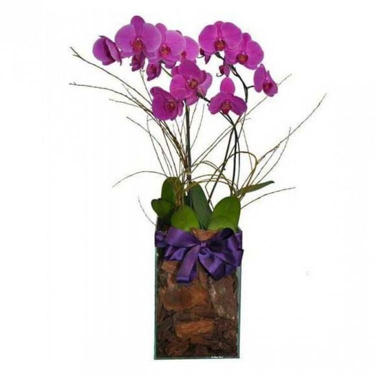 Arranjo de Orquídeas Top